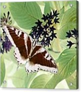 Butterfly - Swallowtail - Photopower 140 Acrylic Print