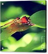 Butterfly Taking The High Ground Acrylic Print