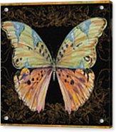 Butterfly Treasure-sofia Acrylic Print