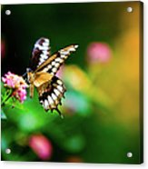Butterfly Two Acrylic Print