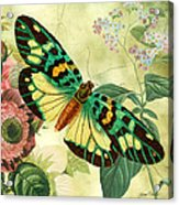 Butterfly Visions-a Acrylic Print
