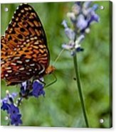Butterfly Visit Acrylic Print