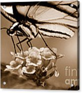 Butterfly Whisper Acrylic Print