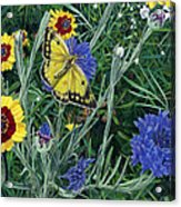 Butterfly Wildflowers Spring Time Garden Floral Oil Painting Green Yellow Acrylic Print