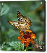 Butterfly Wings Of Sun Light Acrylic Print