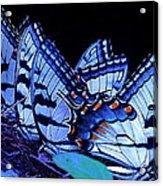 Butterfly Wings Acrylic Print