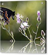 Butterfly With Reflection Acrylic Print
