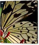 Butterfly World Acrylic Print