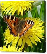 Butterfly Yellow Acrylic Print