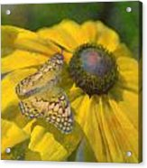 Butterfly7 Acrylic Print