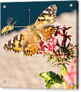 Butterfly's Friend Acrylic Print
