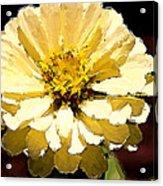 Buttermilk Yellow Acrylic Print