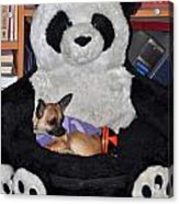 Button And The Panda Bear Acrylic Print