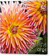 Buy Me Flowers Acrylic Print
