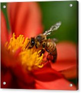 Buzz Is The Word Acrylic Print