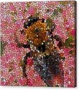 Buzzing Bumblebee Acrylic Print
