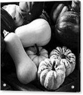 Bw Farm Market Acorn Butternut And Carnival Squash Michigan Usa Acrylic Print