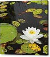 Bwca Water Lily Acrylic Print