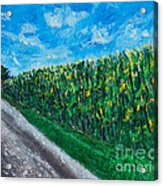 By An Indiana Cornfield The Road Home Acrylic Print