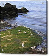 By The Shoreline Acrylic Print