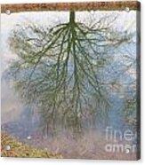 C And O Canal Tree Reflection Acrylic Print
