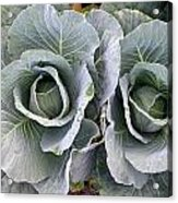 Cabbage Duo Acrylic Print