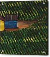 Cabbage Field Acrylic Print