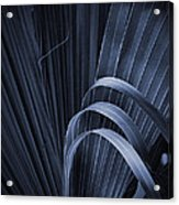 Cabbage Palm No. 3 Acrylic Print