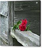 Cabin Rose Acrylic Print