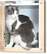Cabinet Cat Acrylic Print