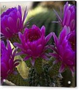 Cacti Flower Bouquet  Acrylic Print