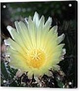 Cacti Flower In White Acrylic Print