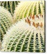 Cacti Acrylic Print