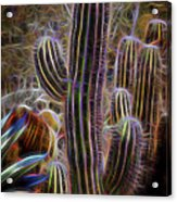 Cacti Lights Acrylic Print