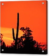 Cactus Against A Blazing Sunset Acrylic Print