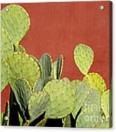 Cactus Against Orange Wall Acrylic Print