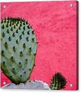 Cactus And Pink Wall Acrylic Print