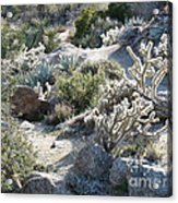 Cactus And Rocks Acrylic Print
