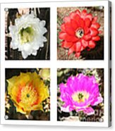Cactus Blooms Collage Acrylic Print