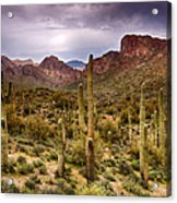 Cactus Canyon  Acrylic Print