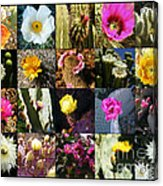 Cactus Collage Acrylic Print