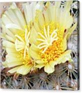 Cactus (coryphantha Echinus) Acrylic Print