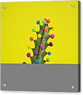 Cactus Decorated With Puffballs Acrylic Print