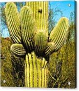 Cactus Face Acrylic Print