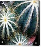 Cactus Family 2 Acrylic Print