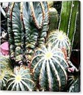 Cactus Family 3 Acrylic Print