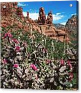 Cactus Flowers And Red Rocks Acrylic Print