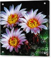 Cactus Flowers With Texture Acrylic Print