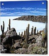 Cactus Forest And Salar De Uyuni Acrylic Print