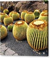 Cactus Garden On Lanzarote Acrylic Print